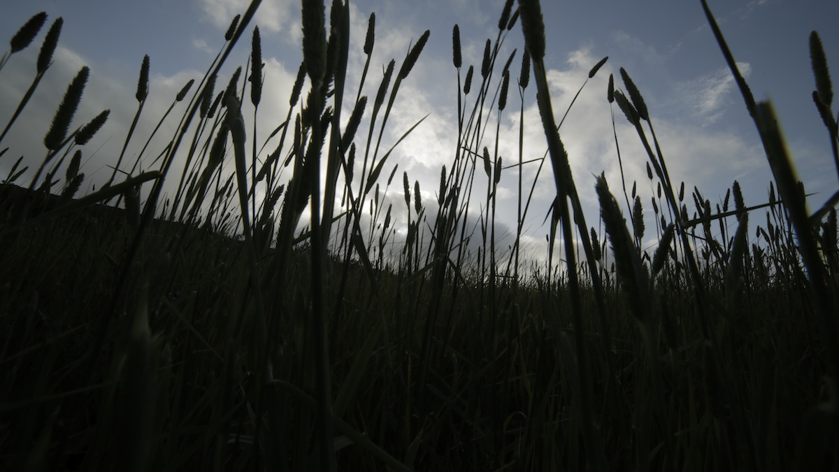 44_Tall Grass Silhouette_Tennesse Valley 1