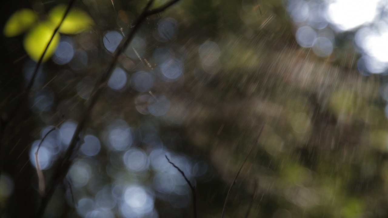 Spider Web Hornby 1